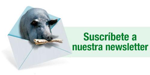 Home 3tres3iberico La Página Del Cerdo Ibérico